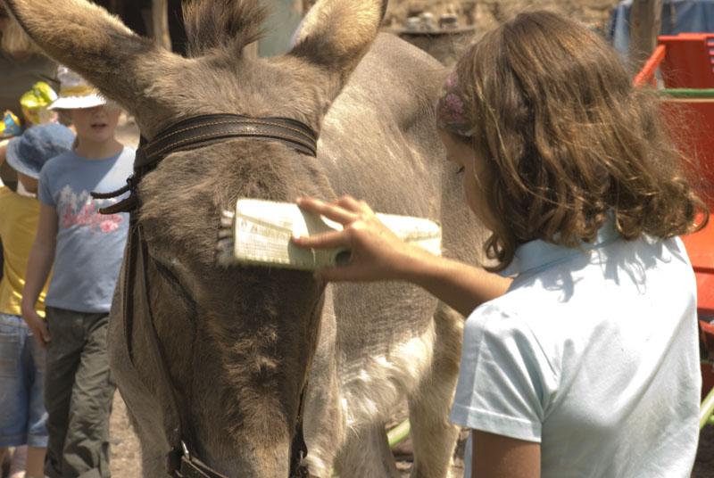 Niña cepillando a burro en Burrolandia