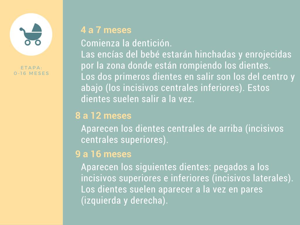 Calendario de dentición de 0 a 16 meses