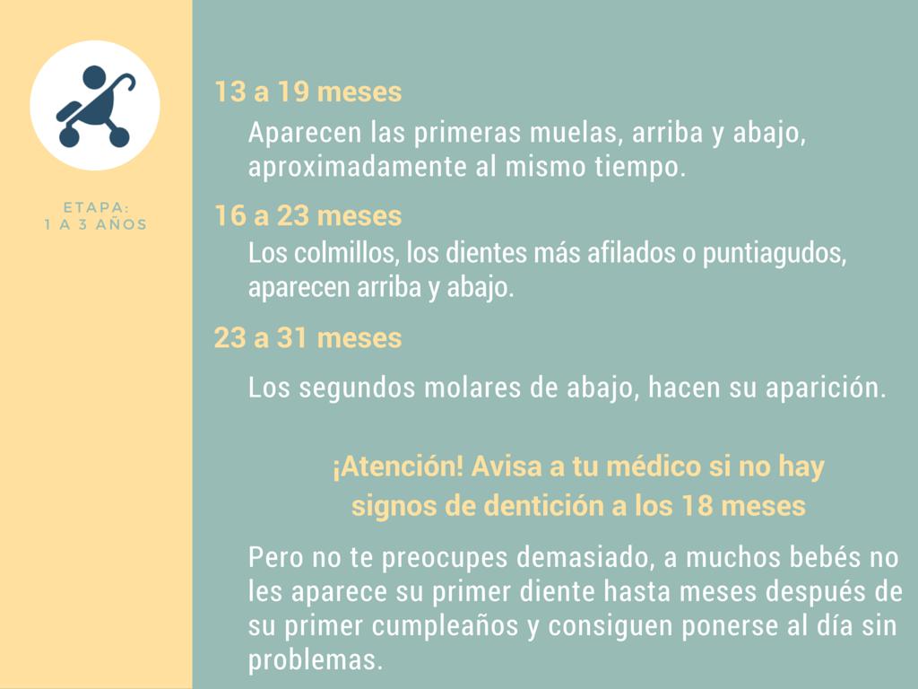 Calendario de dentición de 1 a 3 años
